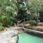 Lush garden area around small pool & spa