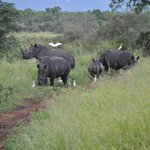A Rhino family in the sanctury.
