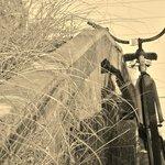 The beach and Bike