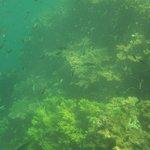 Siete Pescados Reef