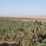 Vista panoramica dell'oasi di Timimoun