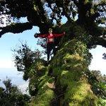 Arbol en el Cerro Negro