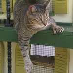 Another one of the 6 toed cats