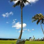 beachfront lawn