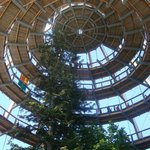 The treetop walk
