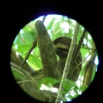 Taken through Ersel's telescope -we could see his belly move with each breath. Many thanks, Ers