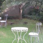 Front yard area, with fig trees, birds, and dining areas.