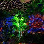 Christmas - inside Bloedel Conservatory at night