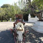 Horse and buggy tour around the grounds