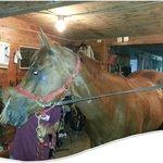 Horse camp at Patriot Farm at the Grand View
