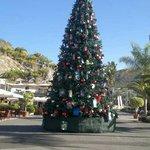 Anfi Xmas Tree