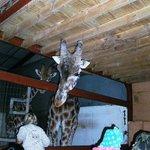 Say hello to Mrs Giraffe!