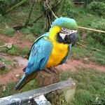 Parrot in the large aviary