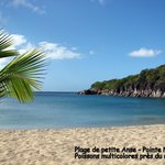 Plage de Petite Anse sur Ferry (poissons tropicaux)