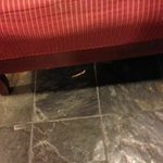 Chicken bones on floor in the lobby - it was there all day
