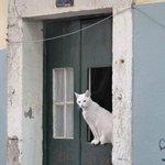 A fine moggie in a doorway in Bairro Alto
