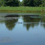 le petit lac à coté