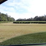 picture of fields from car