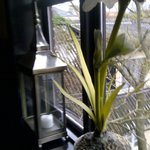 Elegant window ornamentation on the landing: candle lantern and orchid