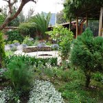 jardin del Ananau desde donde cosechan limones, frambuesas