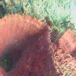Le récif de corail.