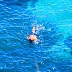 Octopus hunter along the coast