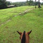 La ballade a cheval a travers les arbres remplis de clémentines et les montagnes