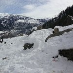 snow at solang valley
