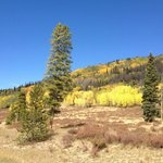 Fall Color-North Park CO-just beyond the Poudre Canyon