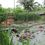 Rear lotus pond