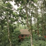 Cabin amidst the coffee planation and silver oak trees