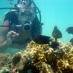 Mergulho em Maragogi ( Alagoas)
