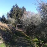 Passeggiate tra gli ulivi