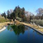 Bio-lago (piscina ecologica)