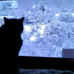 Our cat, Jerry, looking at the new morning snow