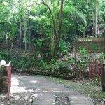 Eingang zum Jungle Bay Resort