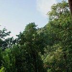 Blick vom Cottage auf den Regenwald