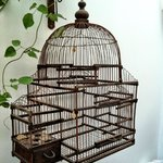 Love the detail with the bird cage