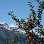 Obst am Hardanger Fjord