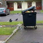 Overflowing bin in parking lot leading to self-catering units