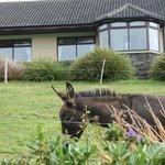 hotel e fauna locale