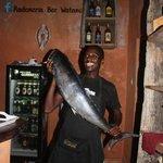 barracuda freschissimo