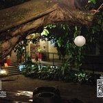 Higueron tree