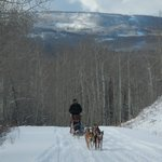 Dog Sled amongst the Aspens on scenic Dunckley Pass!