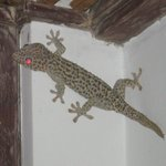 This granddaddy of the geckos (the size of my forearm) was waiting outside for me one evening.