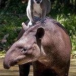 Brisbane's Alma Park Zoo