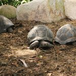 hotel´s large turtles