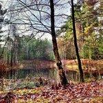uriger Wald auf dem Gelände