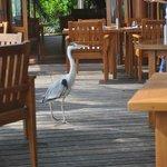 Local bird at the restaurant