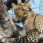 One of my leopard pics